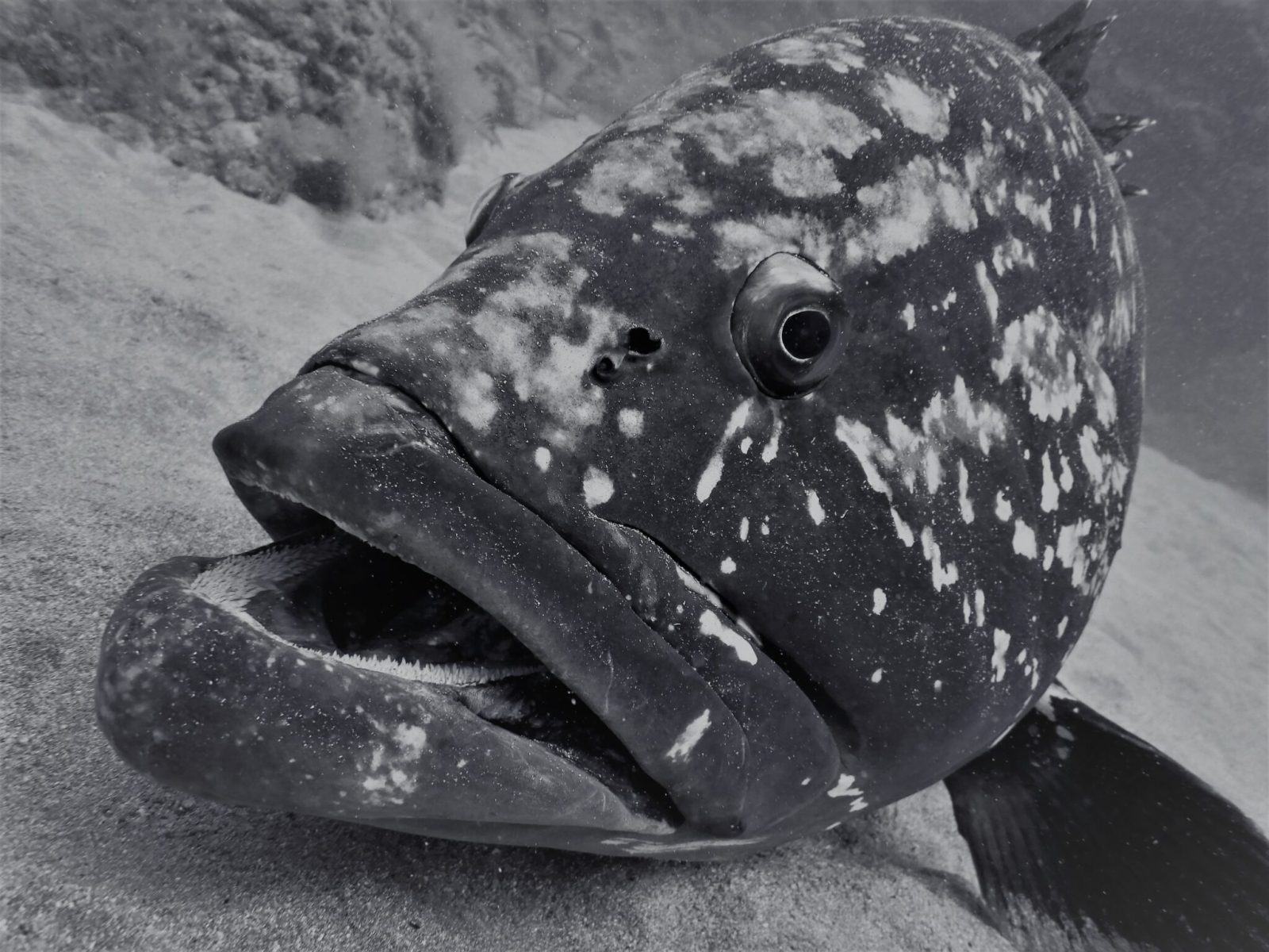 Scuba Diving Porto Santo