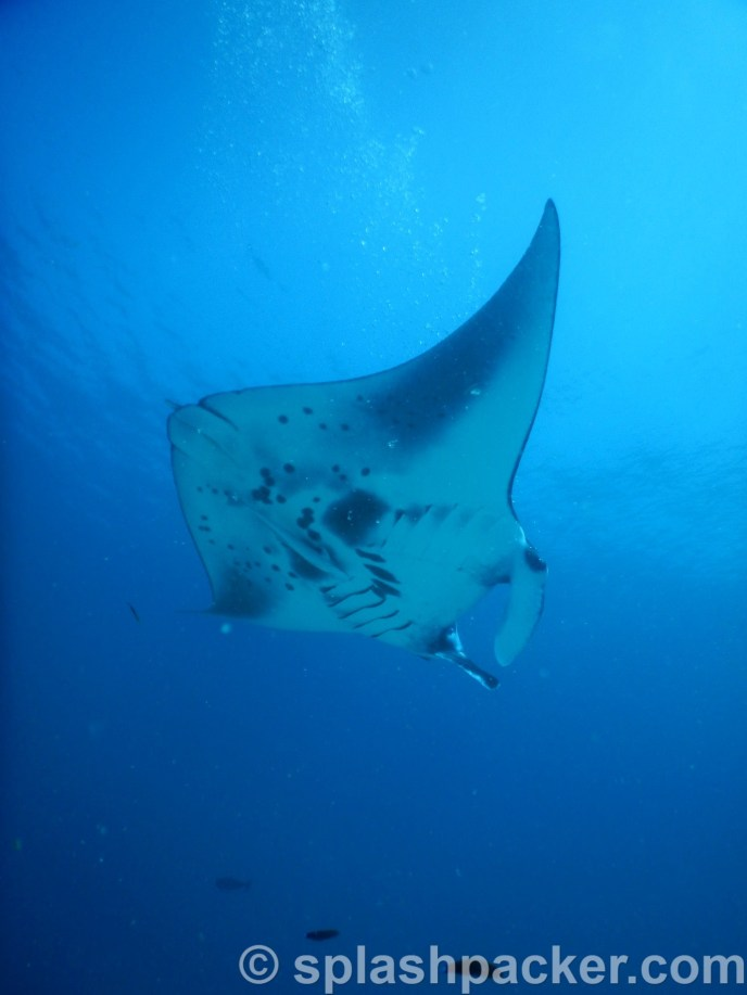 Photo by Nikon Coolpix at Manta Point on Veligandu Island, the Maldives