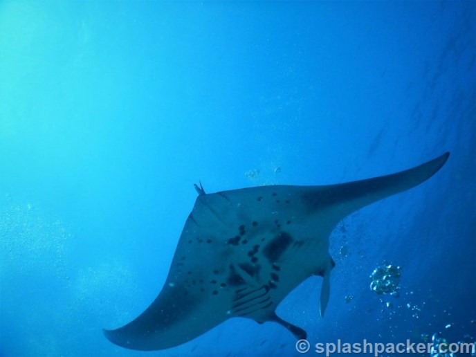 Manta Cleaning Station in Rasdhoo Atoll on the Maldives