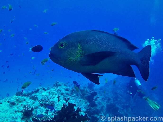 Underwater photo quality of Nikon Coolpix