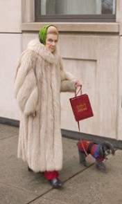 Mature rich woman walking her poodle