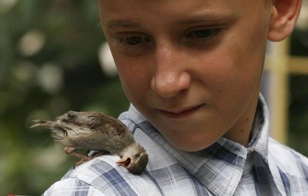 Fine News In Photos Unusual Friendship Boy And Bird Society Download Free Architecture Designs Scobabritishbridgeorg