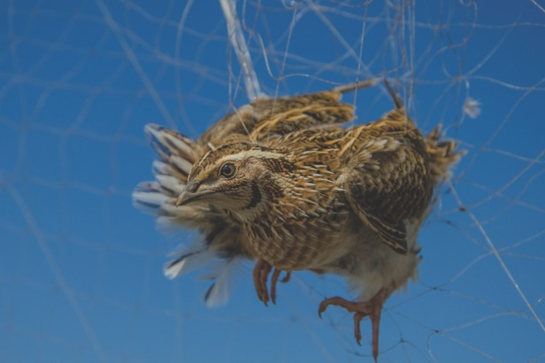Stop Illegal Bird Killing