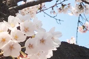 blog_96