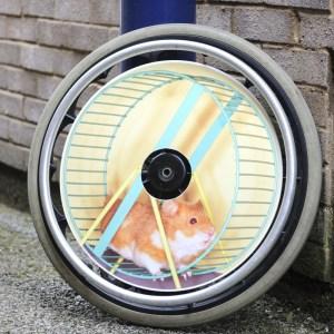 Hamster Wheel SpokeGuards