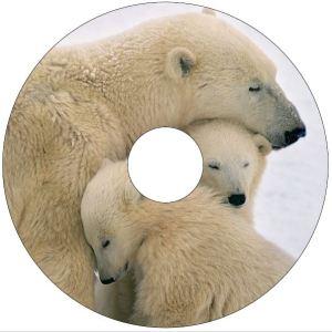 Polar Bears SpokeGuards