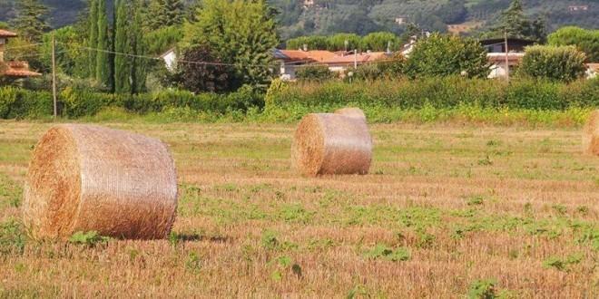 Spoleto, sostegno alla sviluppo delle imprese extra-agricole