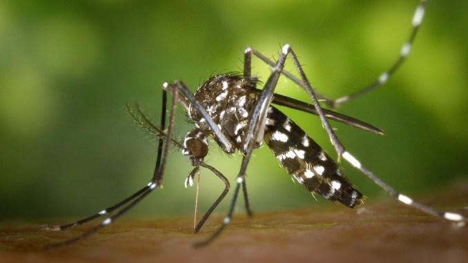 Spoleto, quarto e ultimo ciclo di trattamenti contro la zanzara tigre