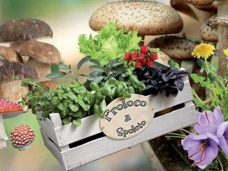 Inaugurazione 25esima edizione Mostra Mercato Funghi ed Erbe Spontanee