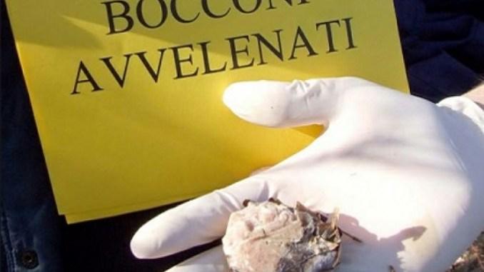 Esche avvelenate a Torricella, tre nuove segnalazioni