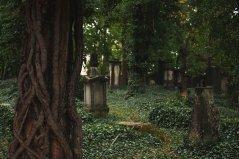 Eliasfriedhof in Dresden (4)