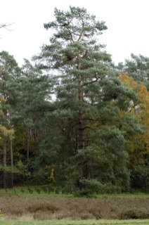 Waldfriedhof Lauheide (3)