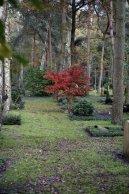 Waldfriedhof Lauheide - Junger Baum