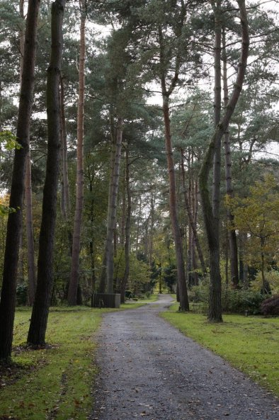 Waldfriedhof Lauheide - Weg