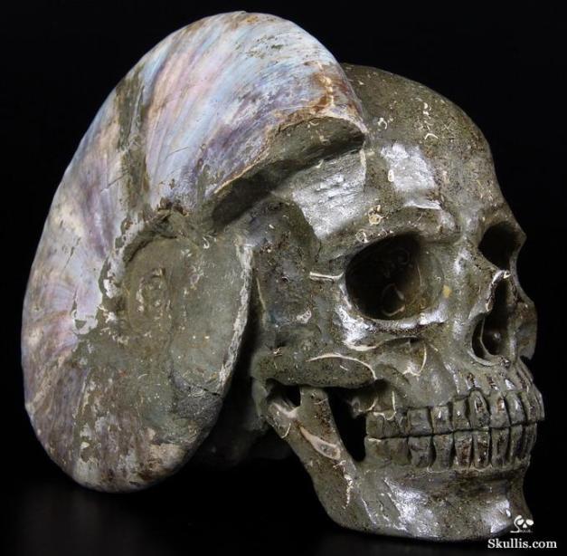 Ammonite skull from Skullis. Thanks, Kari!