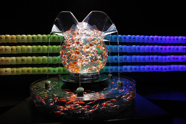 art-aquarium-exhibition-1.jpg