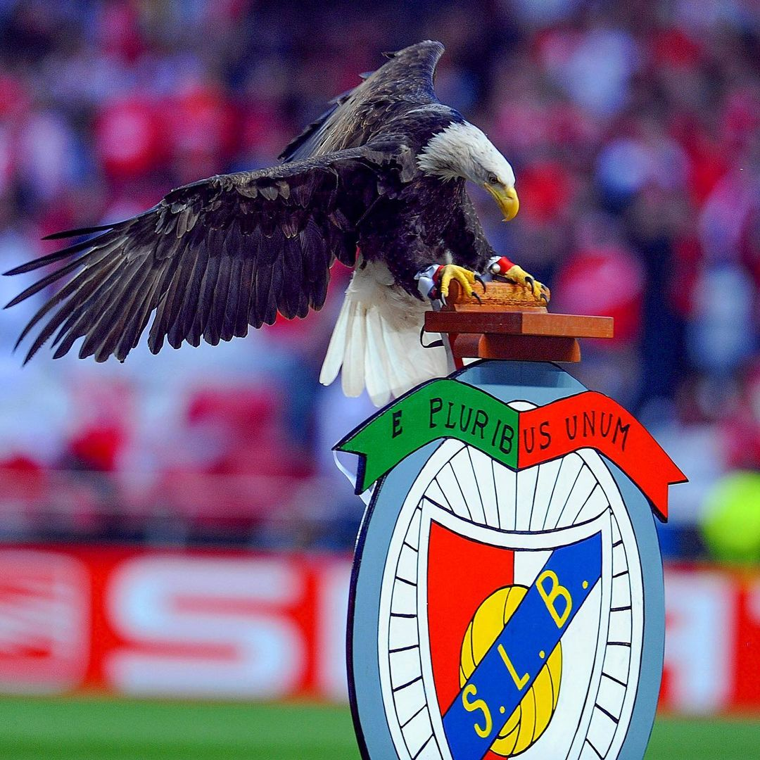Who or what do you associate with Benfica most?    ...