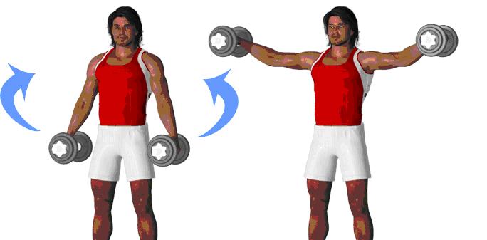 Fitness :Exercice de musculation :Deltoïdes