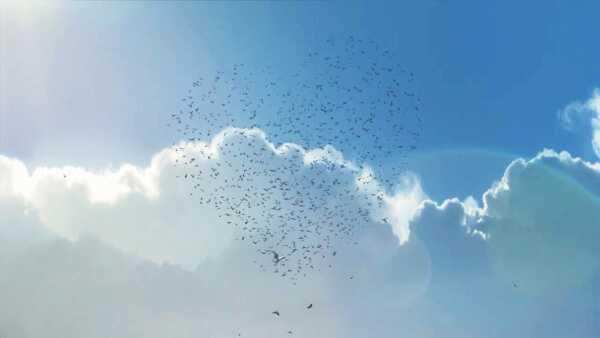 """AIDA auf Reisen mit """"Flug der Möwen"""" - Sponsored Video - Foto: AIDA"""
