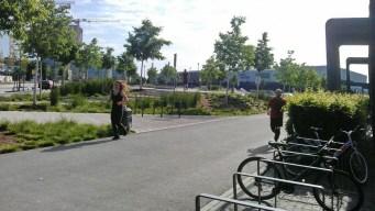 Skatepark_earlybirds_50