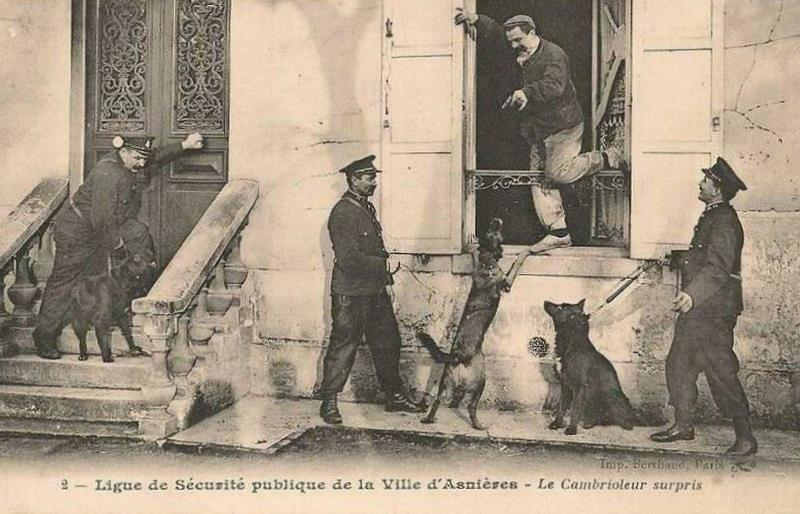 French police dogs