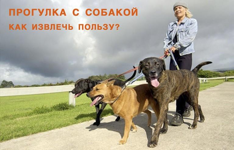 Как гулять с собакой