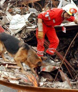 Собака спасатель работает в руинах ВТЦ в Нью-Йорке, 2001 г.