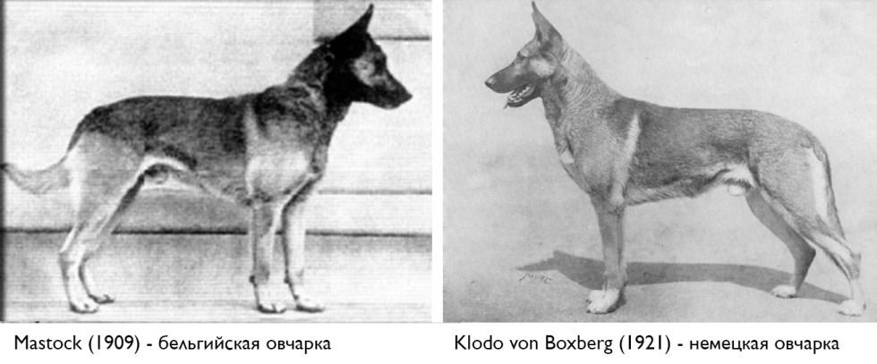 Mastock & Klodo