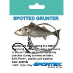 Trace-Spotted-Grunter
