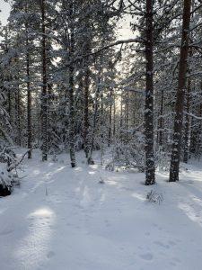 Read more about the article Sporting Kristinan ulkoiluilta Pyhävuorella