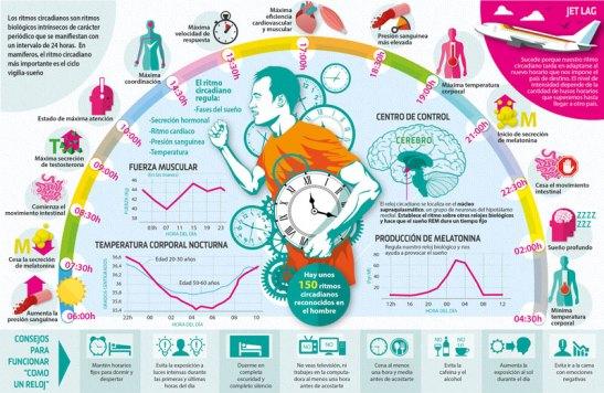 ¿Cómo funcionan los ritmos circadianos?