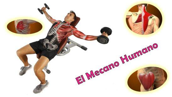 El Mecano Humano