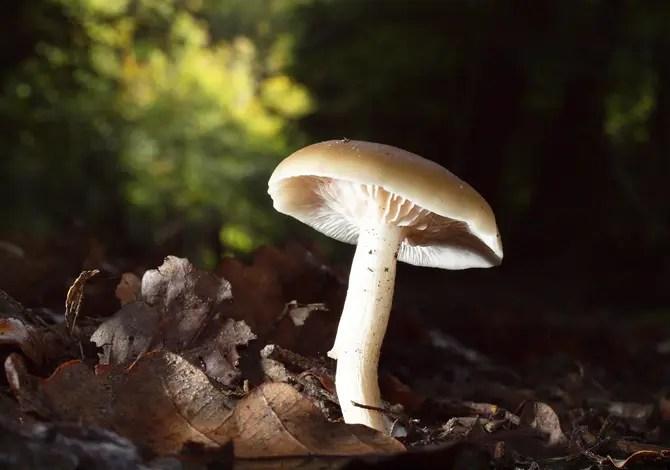 A caccia di funghi: tutte le regole da conoscere