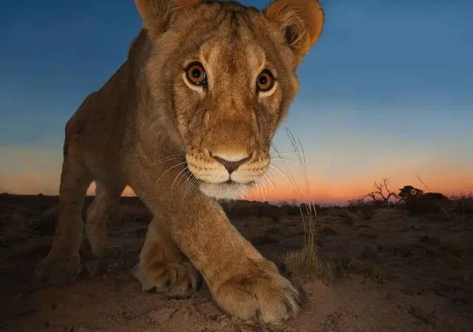 Wildlife Photographer of the Year: le foto in mostra a Milano