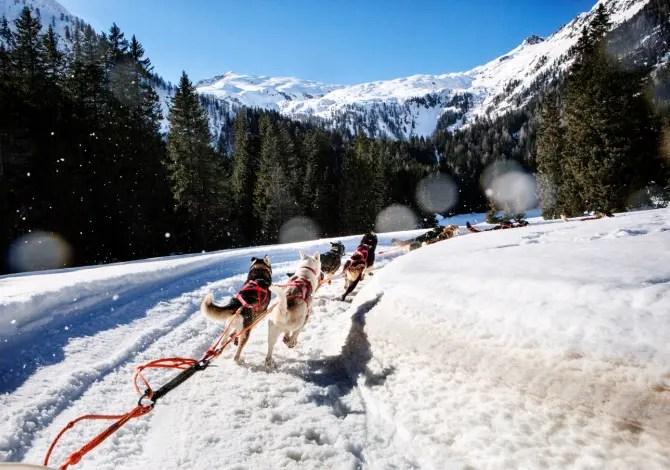 Sleddog: sulla slitta con i fratelli di Balto in Trentino