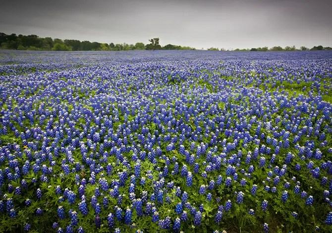 10 bellissimi campi di fiori da vedere una volta nella vita