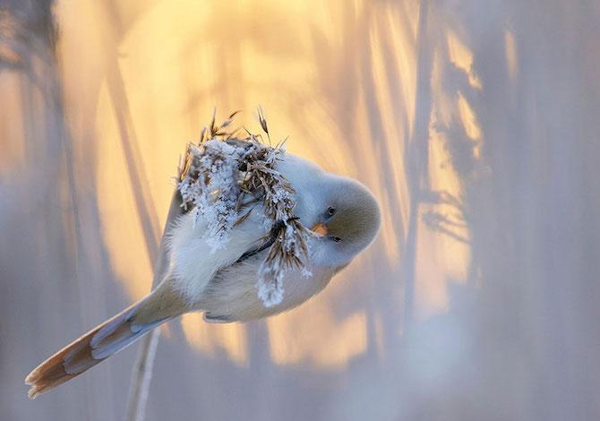 bird-photographer-of-the-year--barbagianni-jamie-hallbasettino-markus-baresuvo