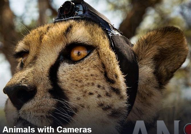 animals_with_camera_1