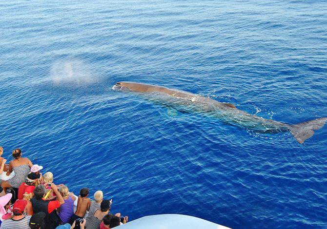 parco-in-festa-balene