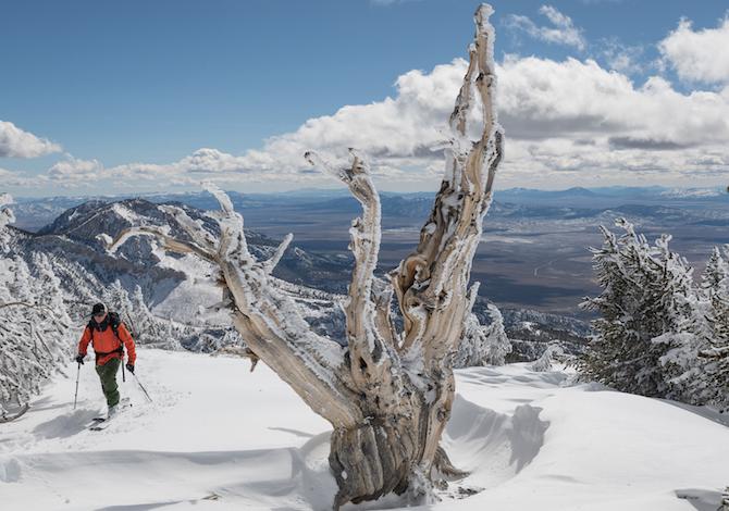 film-treeline-patagonia