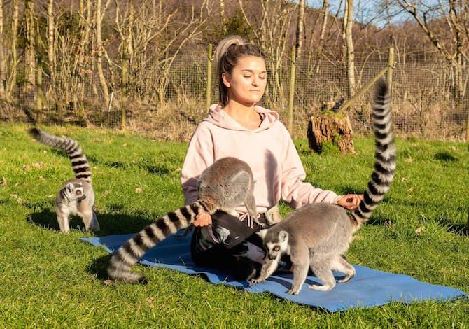 yoga-lemuri-stress-pressione