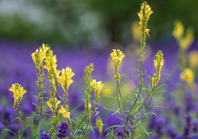 resilienza-ecco-come-i-fiori-recuperano-da-un-infortunio