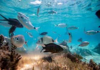 """""""Verso la generazione oceano"""" - Decennio del mare"""