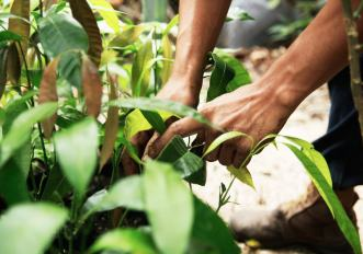 pianta-un-albero-in-citta-con-4-siti-contro-il-cambiamento-climatico
