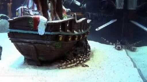 pittsburgh-pirates-shark-tank