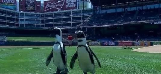 penguins-rangers-ballpark