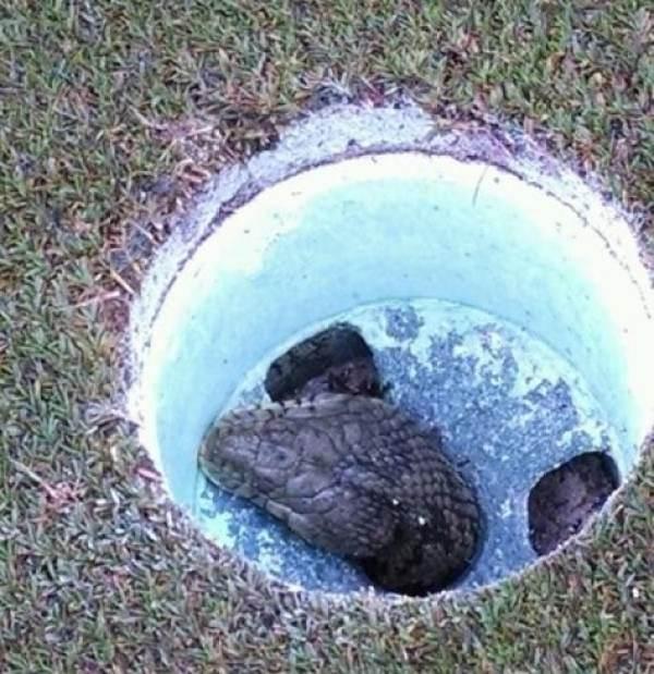 snake-hole