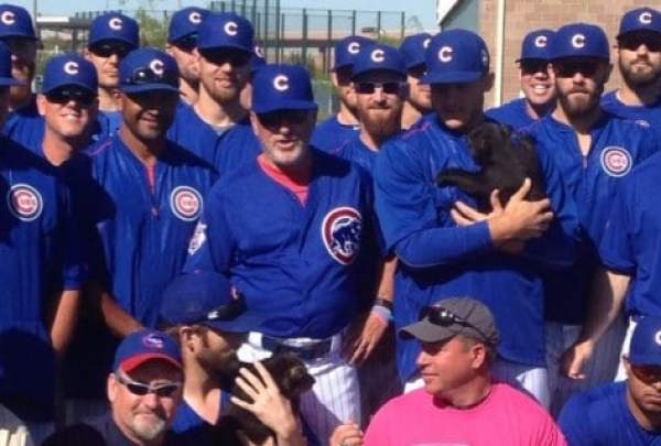 cubs-with-cubs