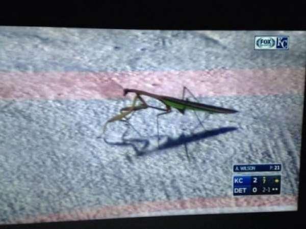 rally-mantis-2