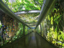 tropical-islands-amazonia-aussenbereich-dschungel-tunnel-eingang